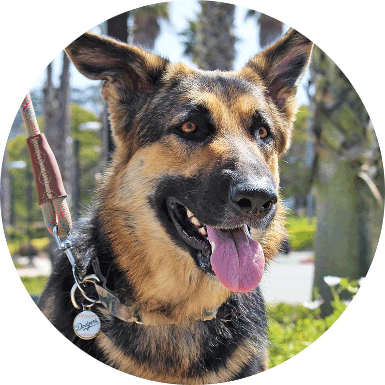 santa barbara humane shepherd training class